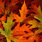 fall_leaves[1]