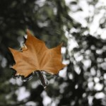 floating-autumn-leaf-1422882-m