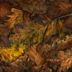 composition-with-autumnleaves-1440684-m