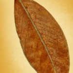 leaf-on-canvas-1431461-m