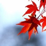 autumn-leaves-1309284-m