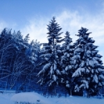winter-in-poland-1445159-2-m