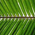 Palm_frond-FelixBurton