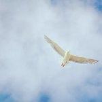 dove-FerdinandFeng-1365889